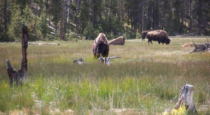 Hubbards Yellowstone Ranch, Montana