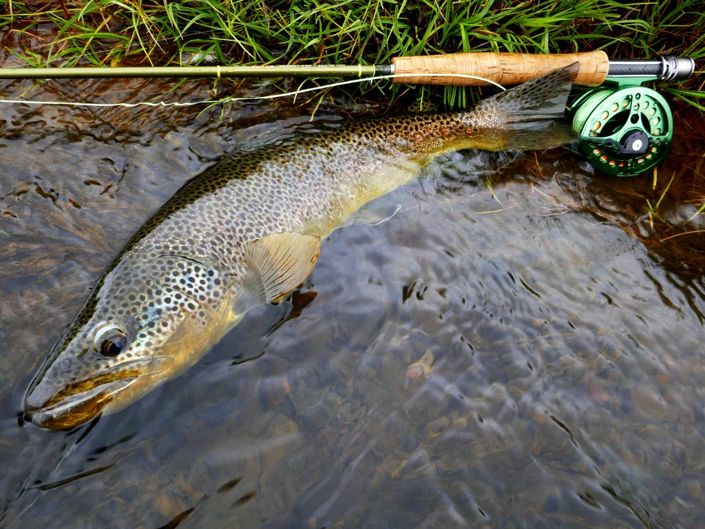 Paul Procter Hosted Trip Report – Iceland Brown Trout