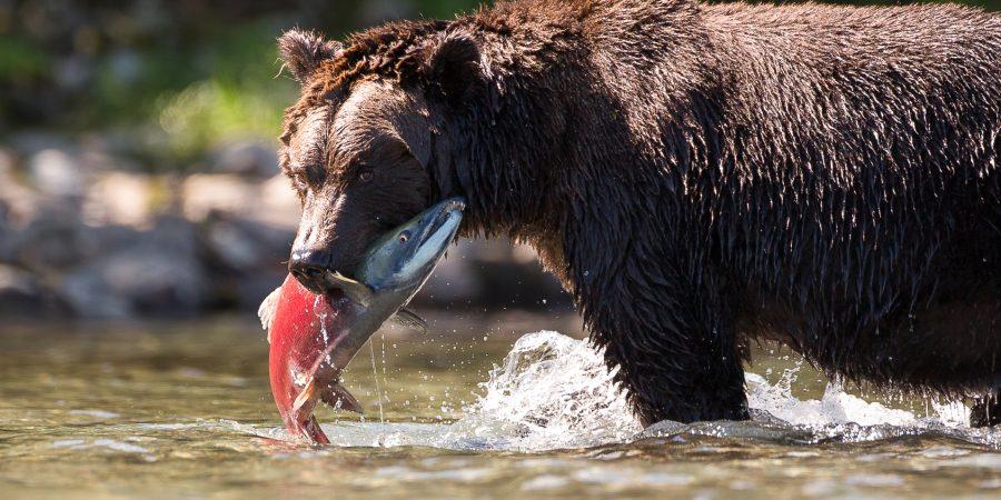Alaskas