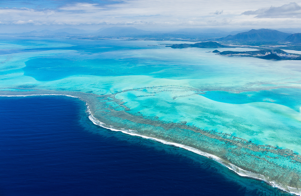 Flylife Article: Windows of Opportunity in New Caledonia